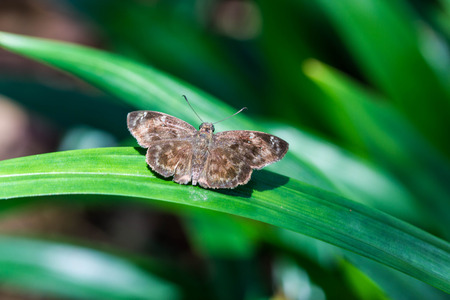 transfigure: a poor butterfly on green plant
