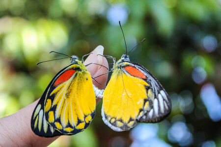 sex  of butterflys photo