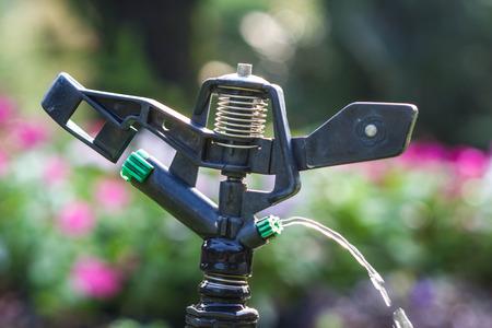 springer: Water springer Stock Photo