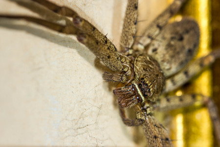 terrify: brown huntsman spider on frame