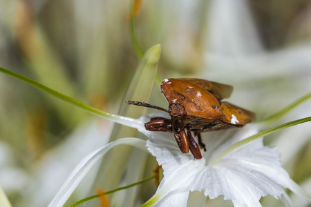 shield bug: Shield bug on nature background