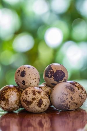 huevos de codorniz: Huevos de codornices en una mesa de madera