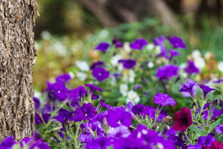 all cute flowers in garden