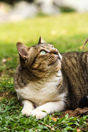 zoomed: cute cat on nature background Stock Photo