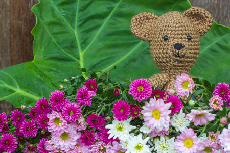 Single bear doll and flowers on wood background