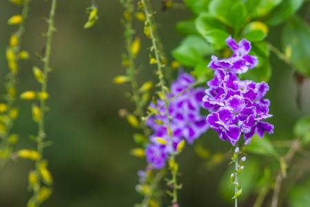 Cute little purple flowers stock photo picture and royalty free cute little purple flowers stock photo 62383115 mightylinksfo