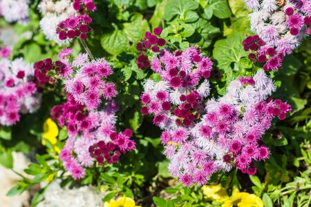 Beautiful little flowers on nature
