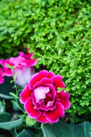 little pink flower in garden