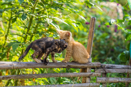 cute cat on bamboo fence
