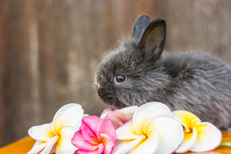 rabit: cute baby rabbit with flower Stock Photo