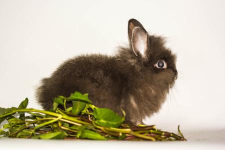 rabit: cute rabbit with morning glory Stock Photo