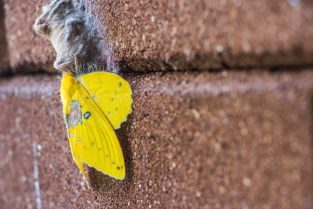 yellow moth on the wall