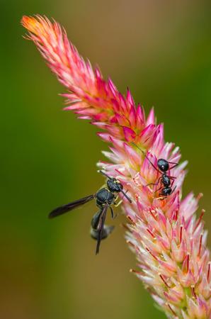 little bee on hornbill flower Stok Fotoğraf