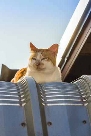 cute orange cat on roof Stock Photo
