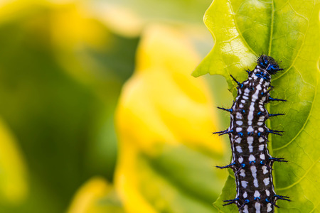 black and white caterpillar on leaf Imagens