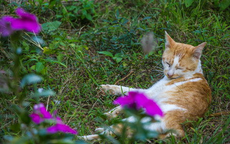 cute orange cat on nature background