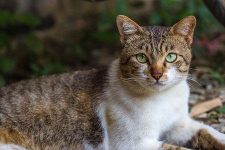 cute cat on nature background Stock Photo