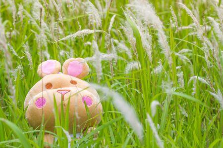 cute hippopotamus doll in grass field