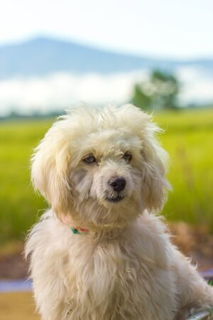 cute old dog on nature background