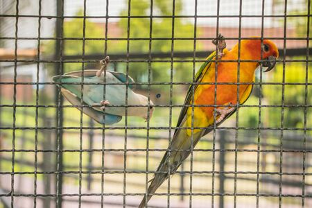 cute little parrot in case