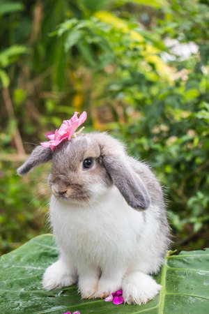 cute rabbit on nature background Standard-Bild