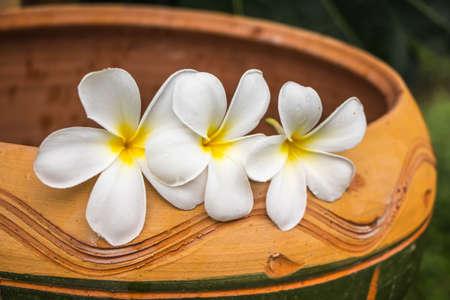 cute frangipani on terracotta basin