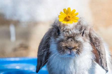 cute little rabbit on blue tank