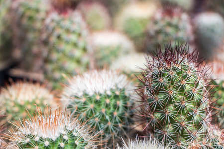 cute cactus selective focus
