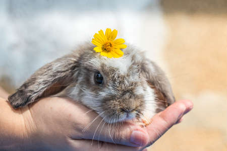 cute little rabbit in hand