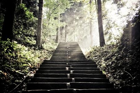 escalera: las escaleras en el parque nacional de Zhangjiajie, China Foto de archivo
