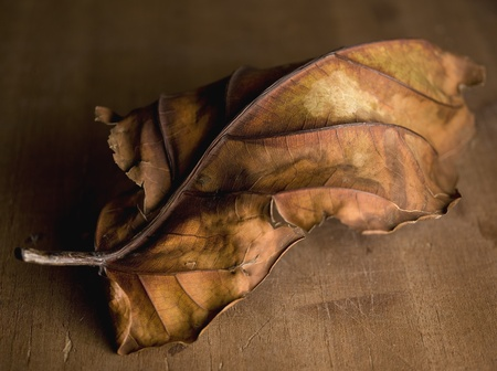 studio shot of the dry fallen leaf