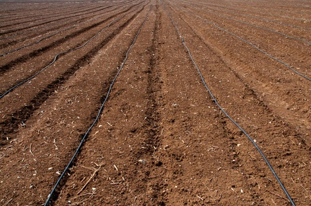 israel agriculture: fragment of the plowed kibbutz field in northern Israel Stock Photo