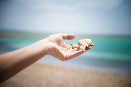 woman`s hand is holding shell on the sea background photo