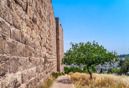 protection of the bible: Olive tree near the wall surrounding the Old City of Jerusalem Stock Photo