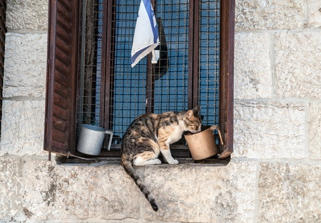 Cat sitting on cornice and drinking water from the mug Stock Photo