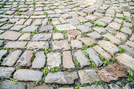 Background of cobblestoned road with making the way sprouts