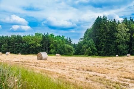 Ricks on the wheat field near the wood Stock Photo