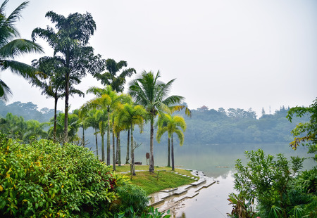 Landscape of lakeside with palms and forest on background