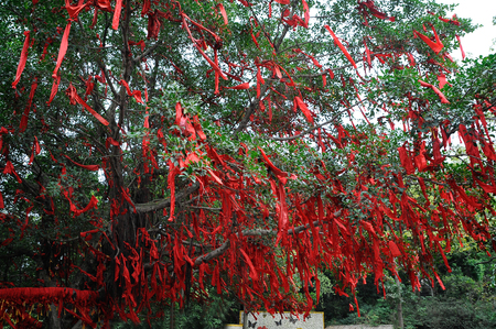 Red ribbons of desires on the tree by Buddhist temple