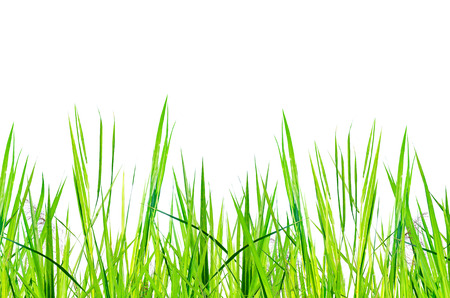 Green Grass on white background for isolated the background, Frame of green grass on white background for cut off and beautiful green grass