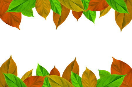 Frame from green leaves on white background for isolated, Frame by green leaf, orange leaf and yellow leaf, Free space by green leaves on white background for cut off