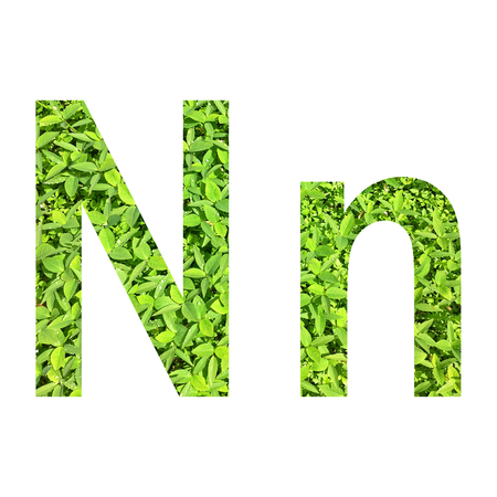 "English alphabet ""N.n"" made from green grass on white background for isolated with clipping path, Capital letter and small letter  from green grass on white background for isolated Stock Photo"