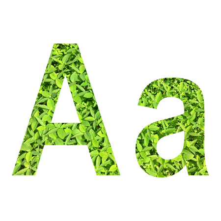 English alphabet �A.a� made from green grass on white background for isolated with clipping path, Capital letter and small letter  from green grass on white background for isolated