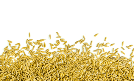 Top view of paddy rice and rice seed on the white background for isolated, Brown of rice grain and close-up of rice pile with free space for text