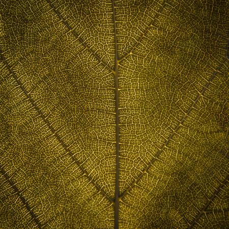 Achtergrond en behang van gele en droge bladeren textuur en structuur van bladvezel, Macro en detail van droog blad. Stockfoto - 102586185