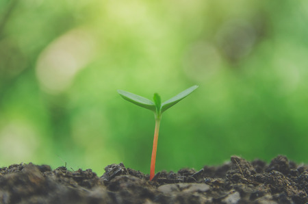 Young plant and fresh sapling in the soil with morning light, Greenery of young plant and seedling are growing, Grow plant and seeding in the soil, Concept of growing business and development idea.
