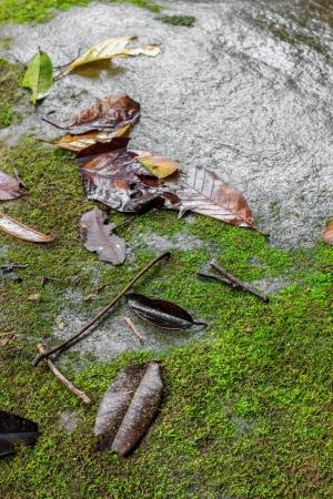 damp: verde muschio sulla pietra di grandi dimensioni freddo umido