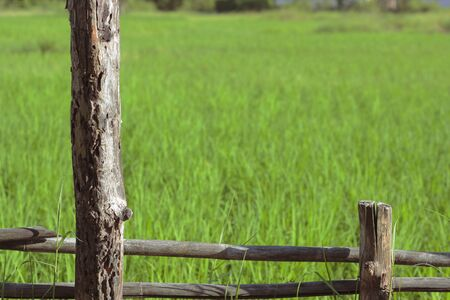wooden fence in rice field Stock Photo