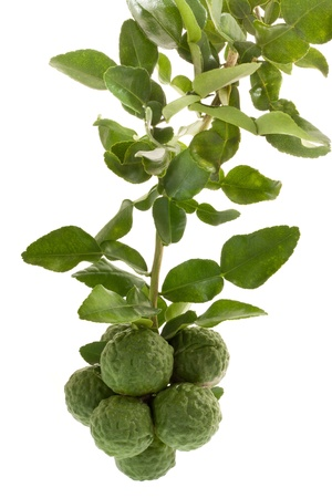 Group of kaffir Lime or Bergamot fruit on white background  Stock Photo - 16849483