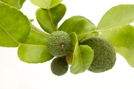Group of kaffir Lime or Bergamot fruit on white background